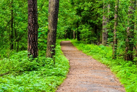 path between trees in the forest in summertime