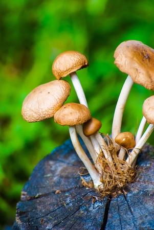 mushrooms on stump on a bright day photo