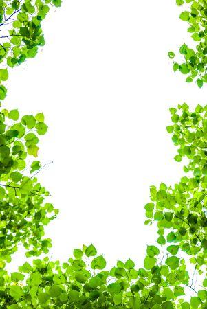 natural green leaves frame on white sky Reklamní fotografie