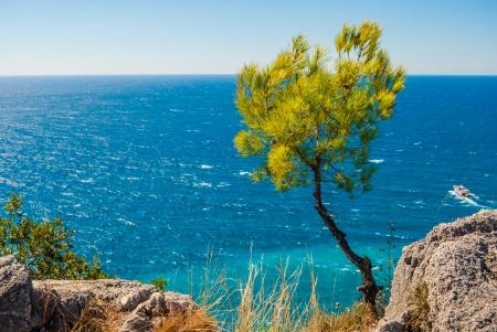 pine and rocks of Alanya peninsula, Antalya, Turkey photo