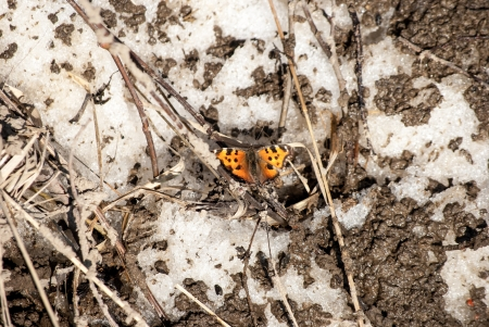 butterfly on dusty ground photo