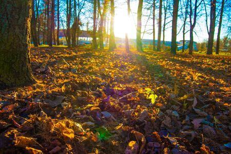 vibrance: yellow autumn leaves in sunlight Stock Photo