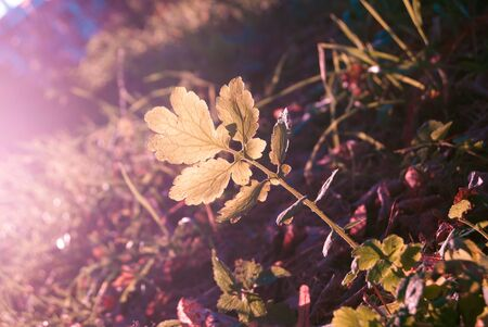vibrance: green sprout in autumn leaves in sunlight