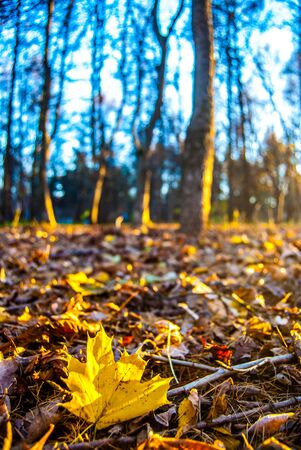 vibrance: autumn leaves in sunlight