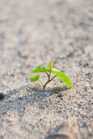 green sprout growing in black ground, macro