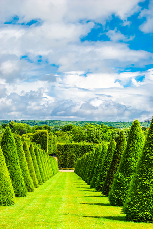 conical hedges lines and lawn photo
