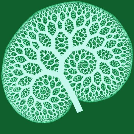 white abstract pattern on green as a concept metaphor for trees, flowers, or human organs photo