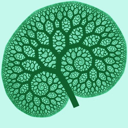 green abstract pattern on white as a concept metaphor for trees, flowers, or human organs photo