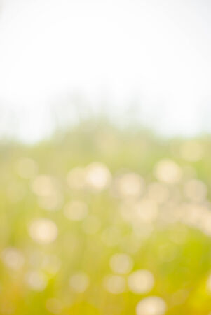 blurred background texture, spring landscape out of focus photo
