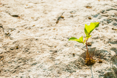 reincarnation: green sprout on stone Stock Photo