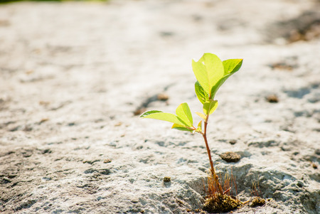 reborn: green sprout on stone Stock Photo