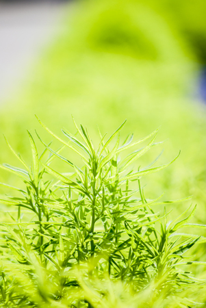 Green plant on flowerbed