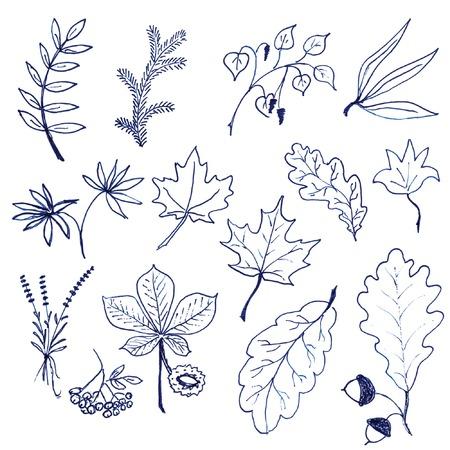 Set of hand drawn leaves Illustration