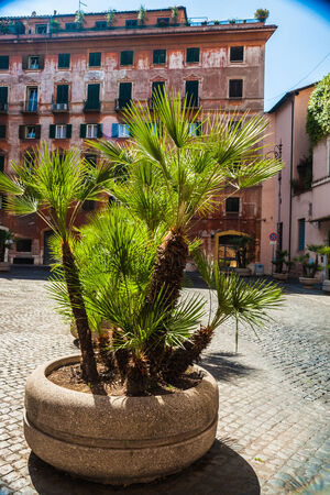 old street in Rome with plants in pots. photo