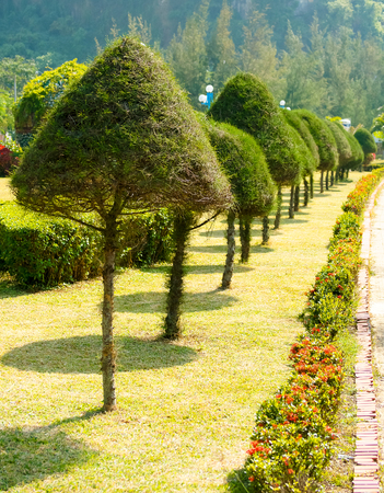 ba: Hedges near Cat Ba bay, Vietnam