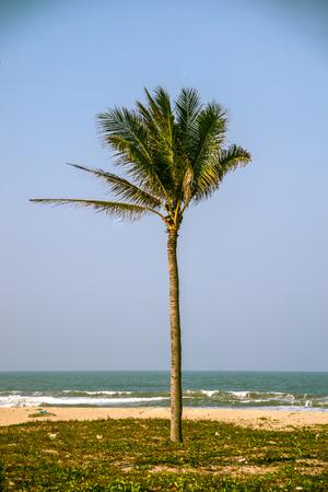 Palm against blue sky on a beach photo