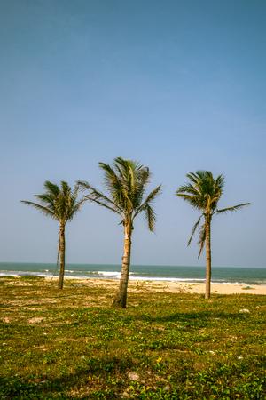 Palms against blue sky on a beach photo