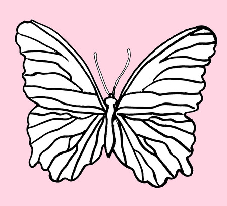 entomological: Hand drawn butterfly with grungy effect. Design element for text decoration - web and printed media. Illustration