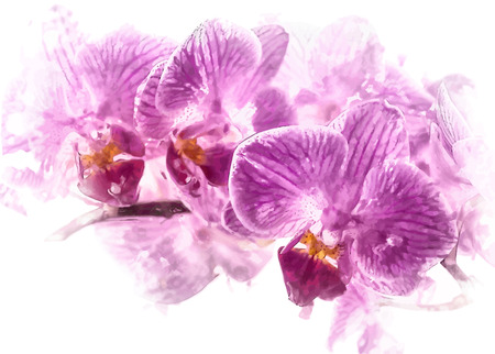 spa still life: Beautiful purple flower of orchid on white. Gorgeous flower background with Phalaenopsis species. Illustration