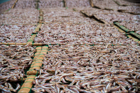 anchovy fish: Planty of freshly caught  little anchovy fish drying on open air in a Vietnamease port