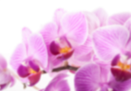 fleur mauve: Beautiful purple flower of orchid on white. Gorgeous flower background with Phalaenopsis species. Illustration