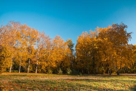 roble arbol: Paisaje de otoño con árboles de colores y reflejos en la lente
