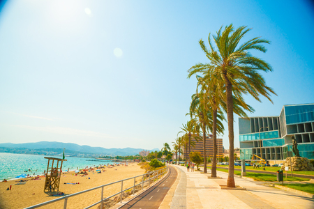 Palm trees along the coast in Palma de Mallorca at beautiful sunny day. Image of tropical vacation and sunny happiness. Serene summer photo.