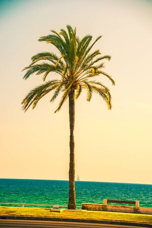 human palm: Palm trees along the coast in Palma de Mallorca at beautiful sunny day. Image of tropical vacation and sunny happiness. Filtered vintage photo. Stock Photo
