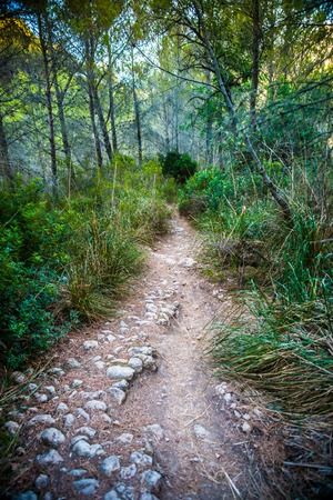 trees photography: Stony bending path in a countryside among green trees and grass. Walkway in a tropic forest, beautiful landscape photography. Stock Photo