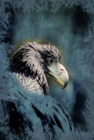juvenile: Portrait of a Black Kite with staring eye. Vintage painting, background illustration, beautiful picture, travel texture Stock Photo