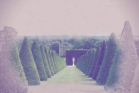 the french way: conical hedges lines and lawn, Versailles Chateau, France. Vintage painting, background illustration, beautiful picture, travel texture