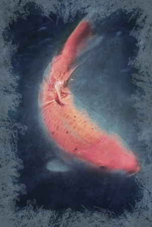 turbid: A Huge red koi fish swimming in turbid water. Vintage painting, background illustration, beautiful picture, travel texture