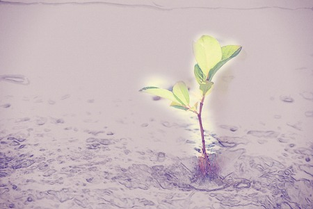 green sprout on stone. Vintage painting, background illustration, beautiful picture, travel texture