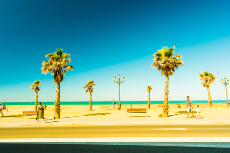 playa: Palm trees along the coast in Cadiz at beautiful sunny day. Image of tropical vacation and sunny happiness. Filtered vintage photo. Stock Photo