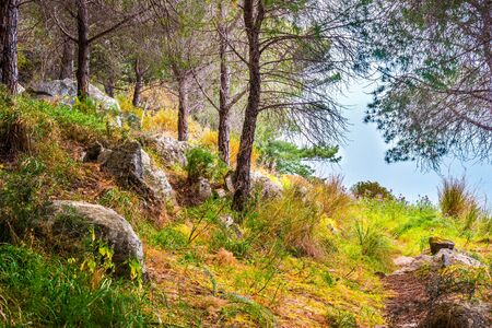 mediterranean forest: Landscape with trees and stones. Beautiful picture of mediterranean forest. Travel Photography.