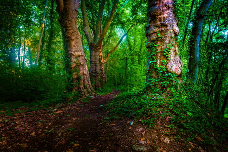 Dark moody forest with path and green trees,