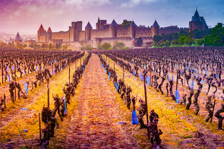 View of the medieval city of Carcassonne from a vineyard, Languedoc-Roussillon, Aude, Occitanie, France Imagens