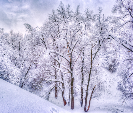Winter landscape with snowy trees along the winter park