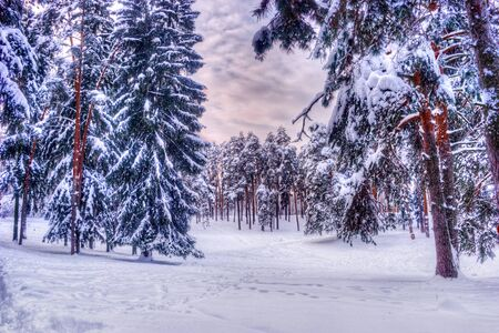 Christmas winter landscape, spruce and pine trees covered in snow on a mountain road Reklamní fotografie