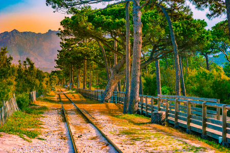 Railroad in Calvi among pines, Corsica island, France. Beautiful travel picture of famous turist destination.