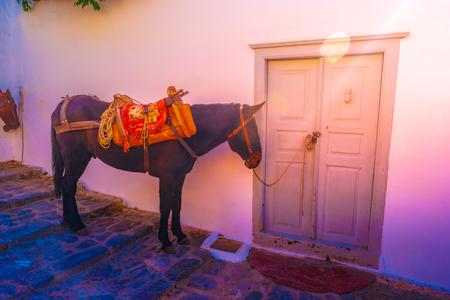 Asini, i mezzi di trasporto all'isola di Hydra Golfo Saronico Grecia. Archivio Fotografico