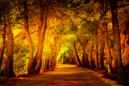 Pine tree avenue in the mediterranean region. Beautiful landscape picture