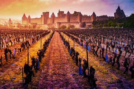 View of the medieval city of Carcassonne from a vineyard, Languedoc-Roussillon, Aude, Occitanie, France Reklamní fotografie