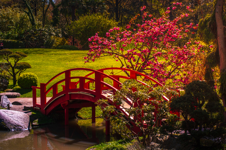 Japanese garden in Toulouse city park, France. Nice outdoor scene. Reklamní fotografie