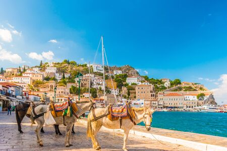Donkeys at the Greek island Hydra. They are the only means of transport on the island, no cars are allowed.