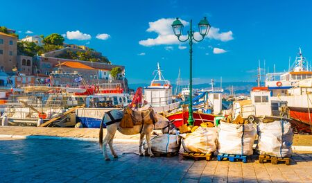 Donkeys, the means of transport at Hydra island Saronic Gulf Greece.