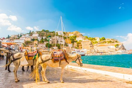 Donkeys, the means of transport at Hydra island Saronic Gulf Greece. Foto de archivo - 133745229