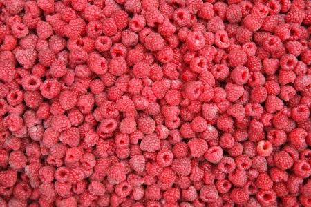 vitaminic: Raspberries - HQ stock photo of red raspberries Stock Photo