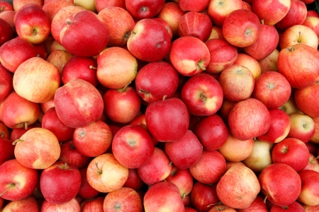 salubrious: Apples - photography of red ripe apples