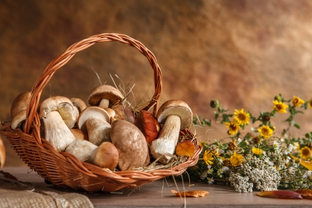 riboflavin: Still life with basket of mushrooms - studio photography of wicker basket with eatable mushrooms Stock Photo